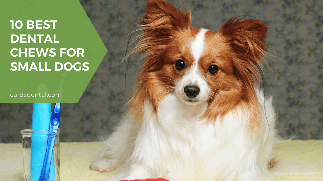 10 Best Dental Chews for Small Dogs