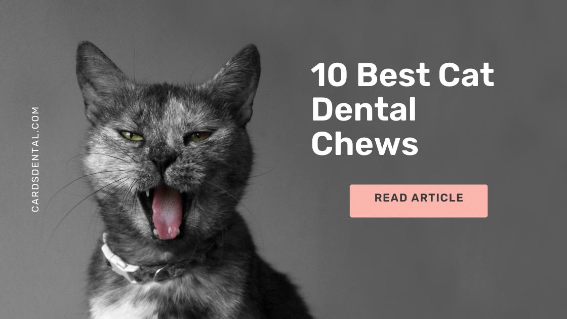 10 Best Cat Dental Chews