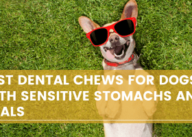 Best Dental chews for Dogs with Sensitive stomachs